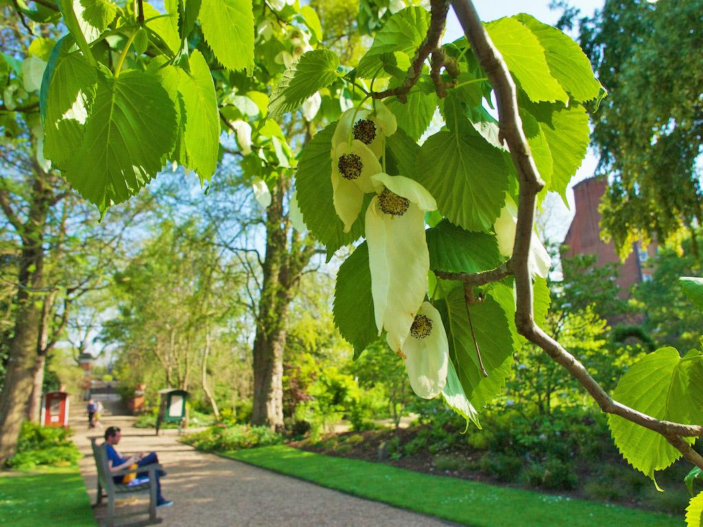 Chelsea Physic Garden, Chelsea flower show