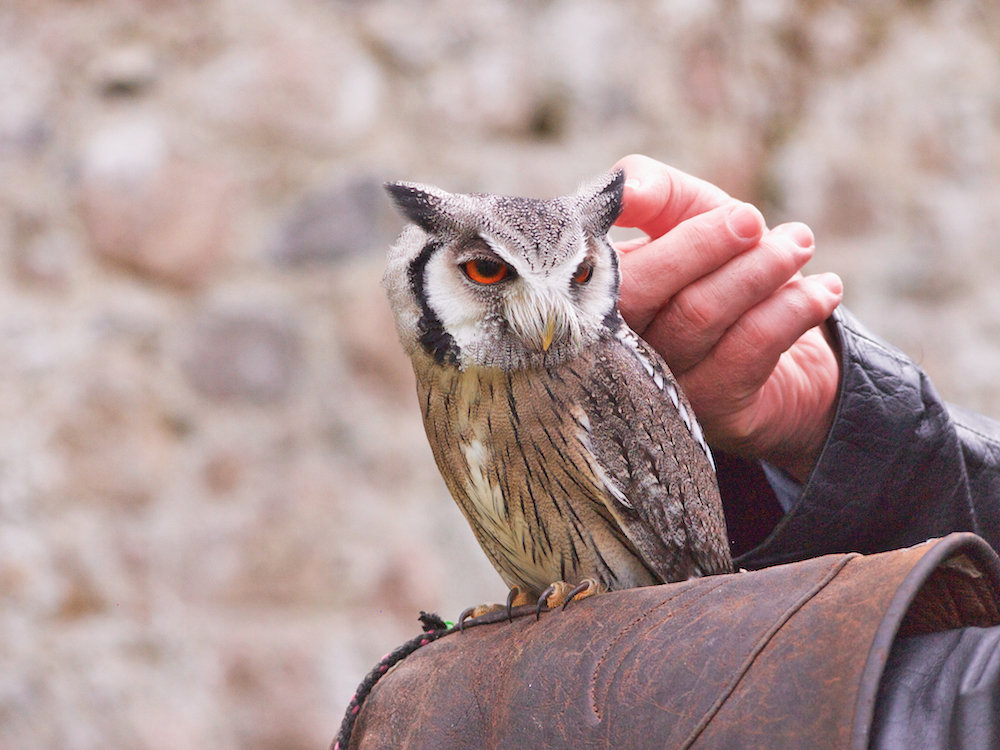 archery and falconry in a walled garden at Glenlo Abbey Hotel and Golf Course Ireland