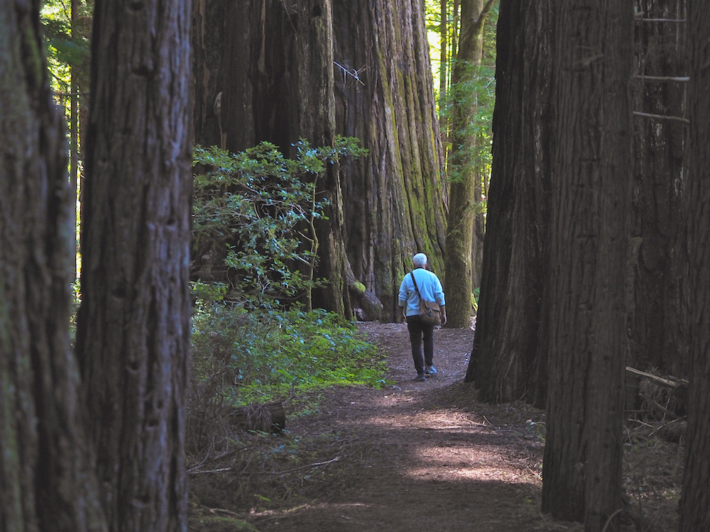 hiking in north california, redwood forest hikes, montgomery park mendocino