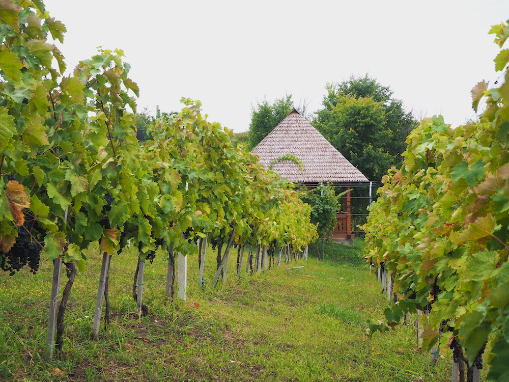 Mugur Isarescu wines, National Bank Governor Romania, wine making in Romania