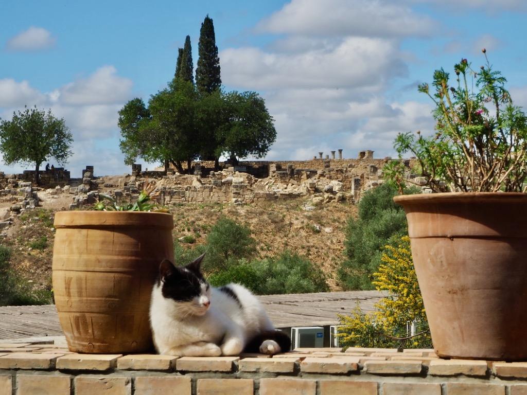 Volubilis morocco, luxury tours morocco