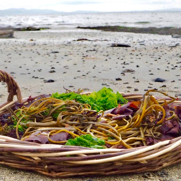 Irish seaweed kitchen, Prannie Rhatigan, seaweed tours